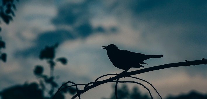 bird silhouette in twilight