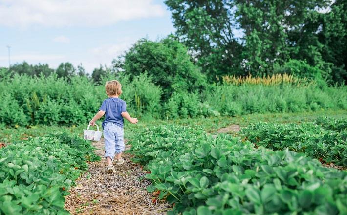 Child walking in garden